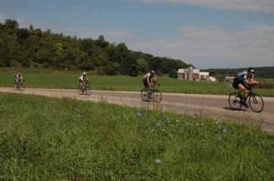 Bike course through cow country